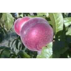 Julie white peach (organic)