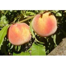 O'Henry yellow peach (organic)